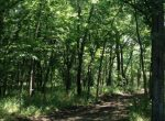 75-acres-in-douglas-country-trees